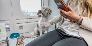 The Best Travel With Pets Must Read About It in 2019 Australia